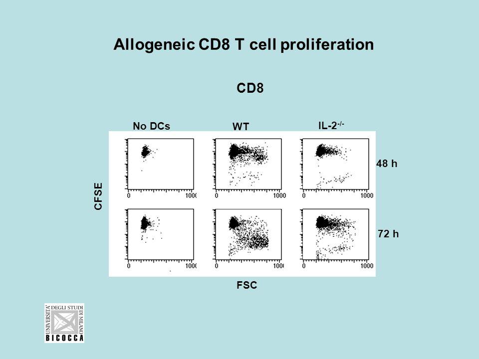 Allogeneic CD8 T cell proliferation