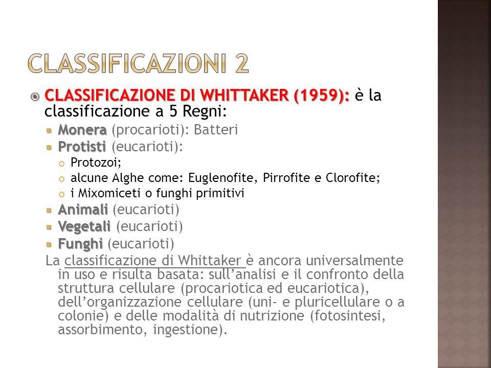 Classificazioni 2 CLASSIFICAZIONE DI WHITTAKER (1959): è la classificazione a 5 Regni: Monera (procarioti): Batteri.