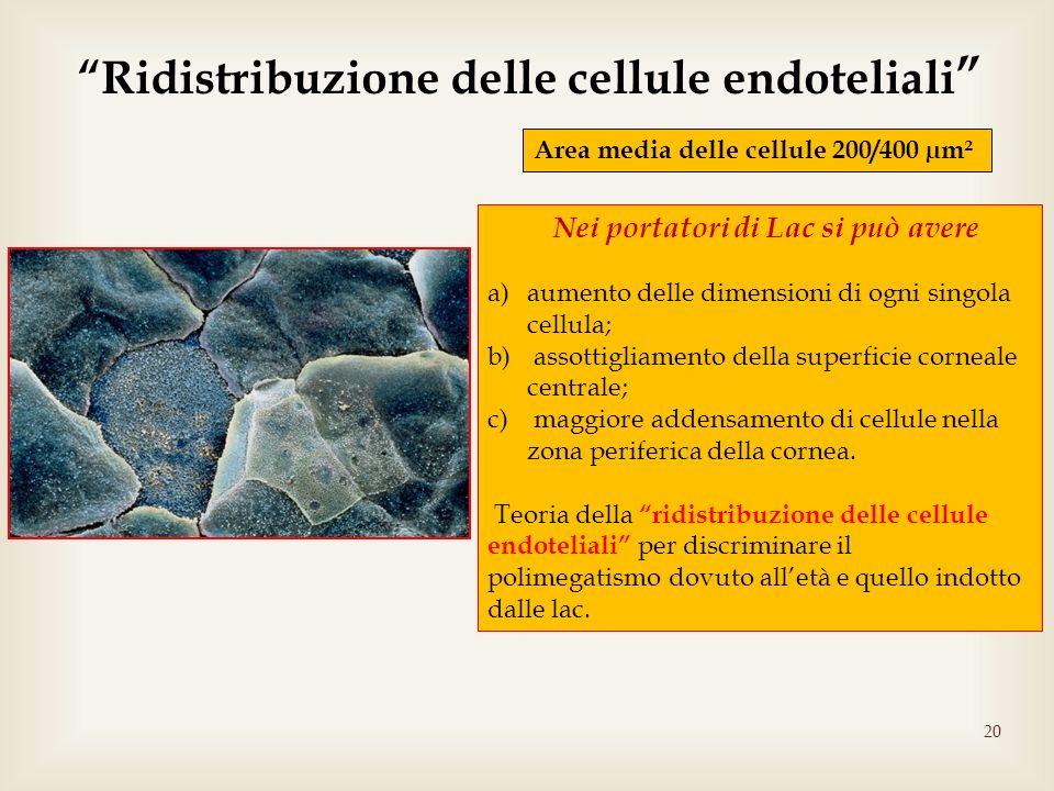 Ridistribuzione delle cellule endoteliali