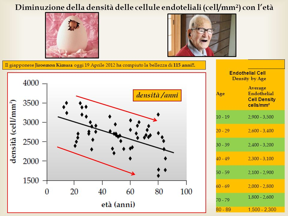 Diminuzione della densità delle cellule endoteliali (cell/mm²) con l'età