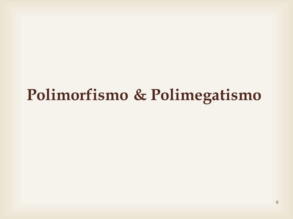 Polimorfismo & Polimegatismo