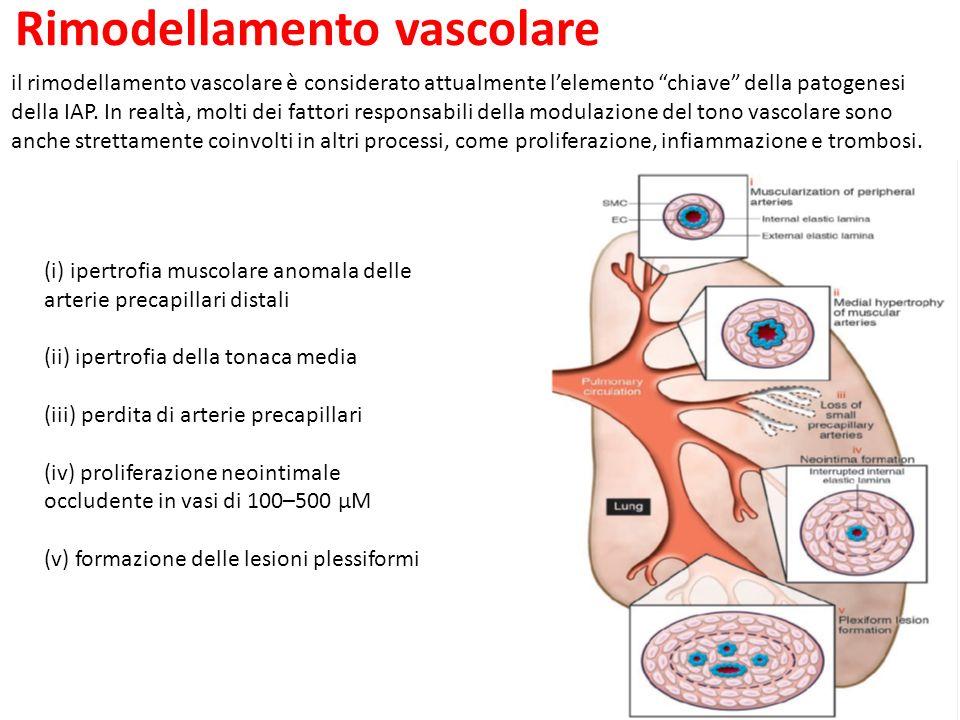 Rimodellamento vascolare