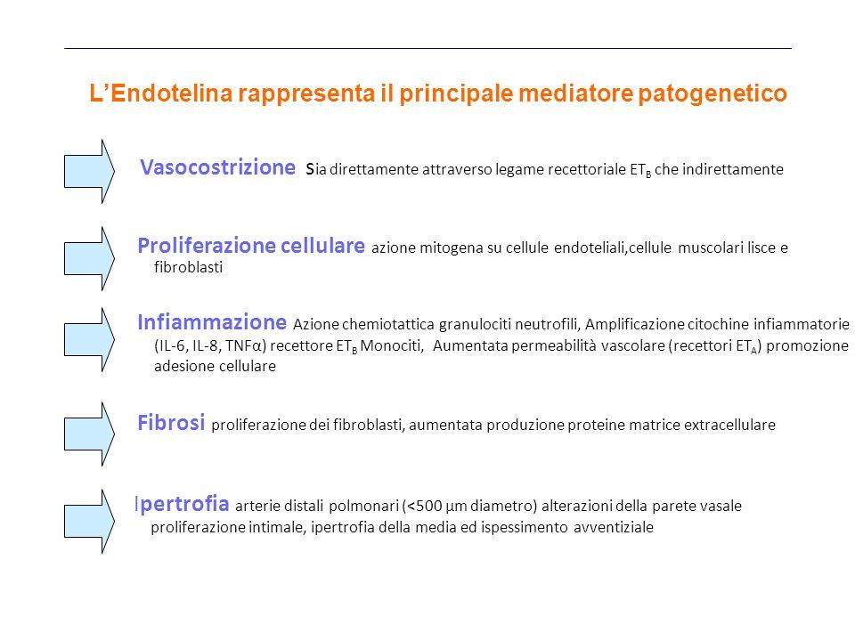 L'Endotelina rappresenta il principale mediatore patogenetico