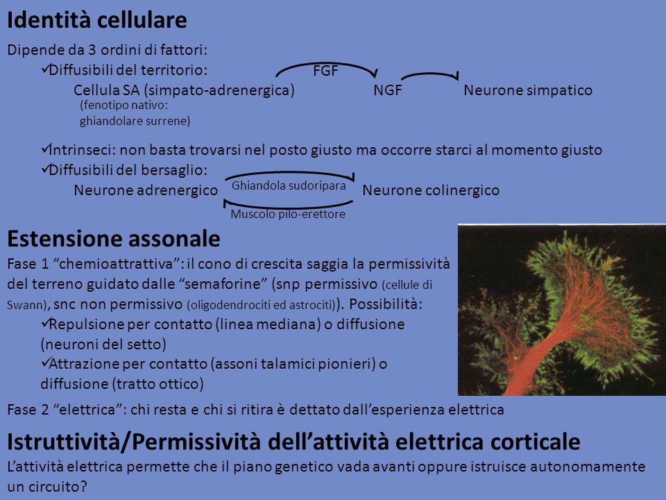 Istruttività/Permissività dell'attività elettrica corticale