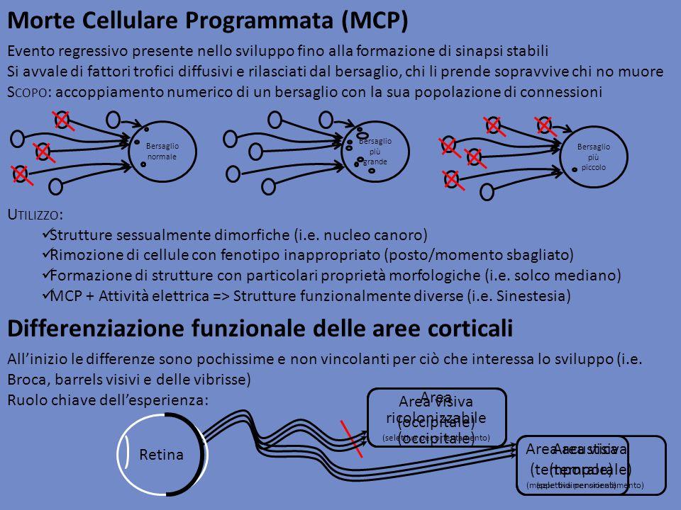Morte Cellulare Programmata (MCP)