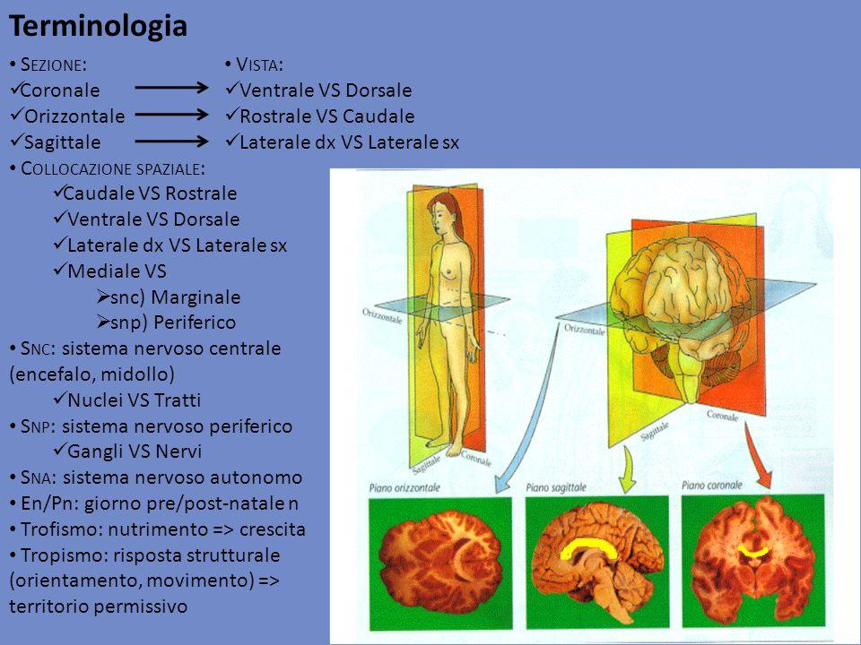 Terminologia Sezione: Coronale Orizzontale Sagittale
