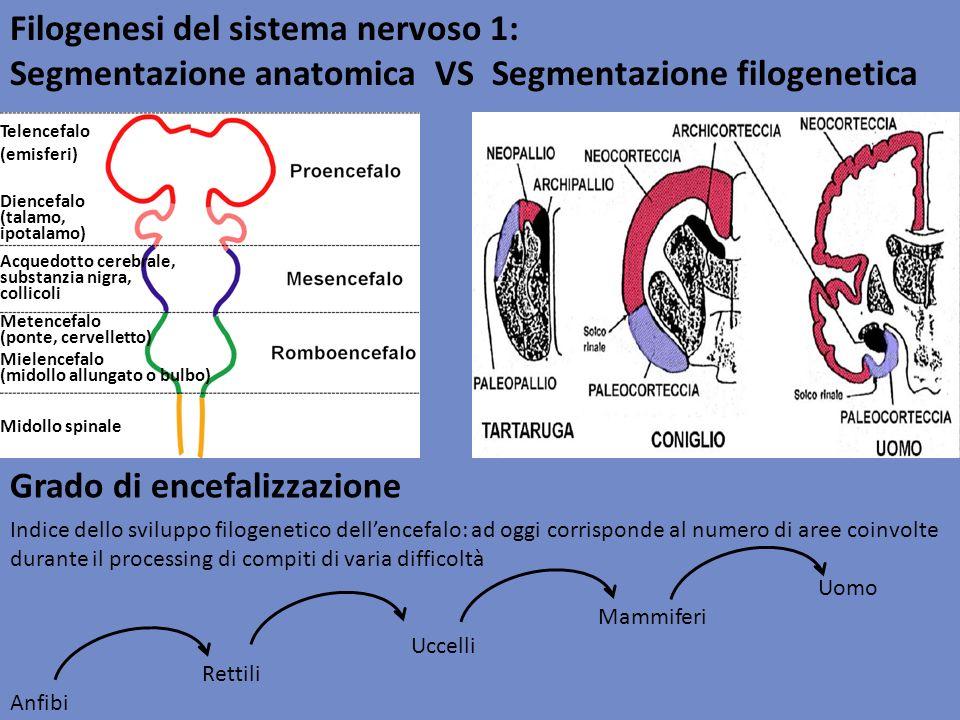 Filogenesi del sistema nervoso 1: