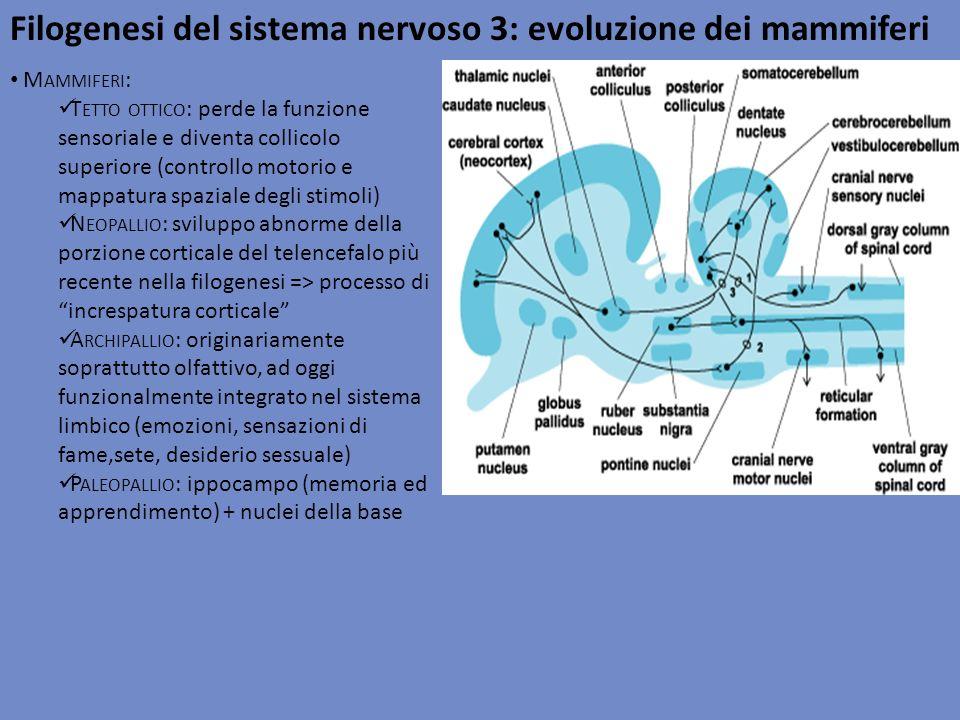 Filogenesi del sistema nervoso 3: evoluzione dei mammiferi