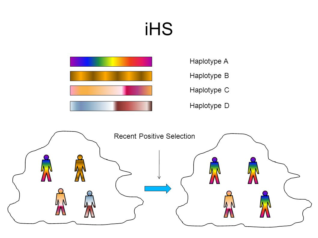 iHS Haplotype A Haplotype B Haplotype C Haplotype D