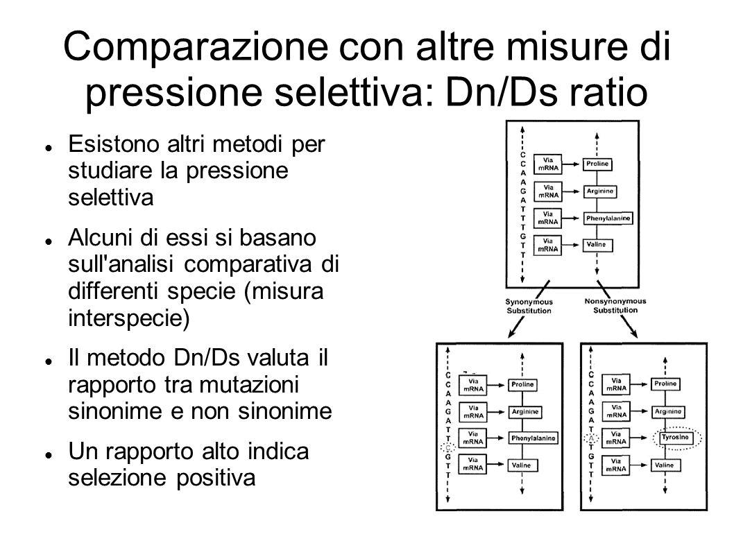 Comparazione con altre misure di pressione selettiva: Dn/Ds ratio