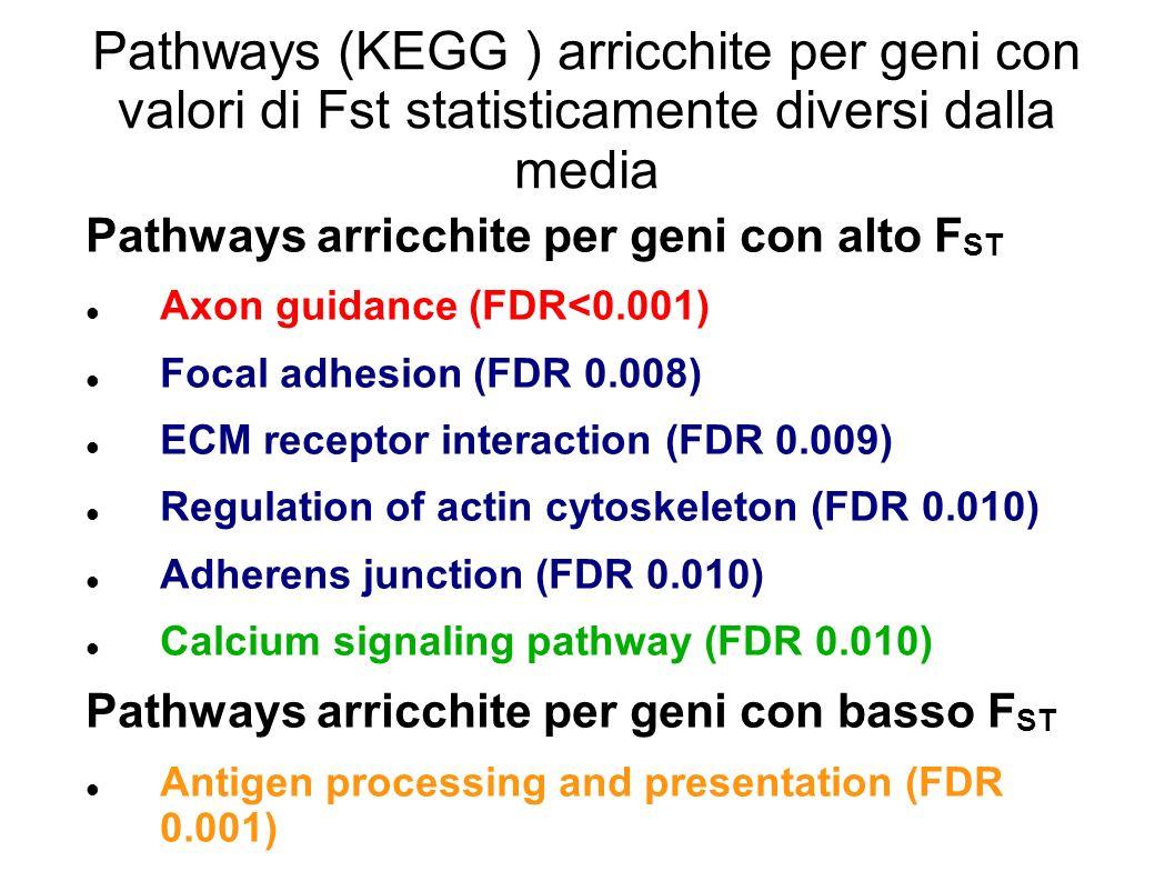 Pathways (KEGG ) arricchite per geni con valori di Fst statisticamente diversi dalla media