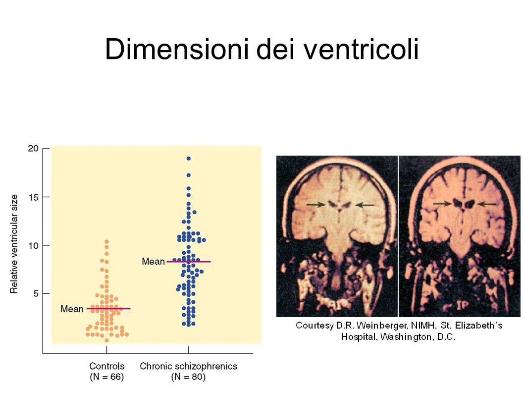 Dimensioni dei ventricoli