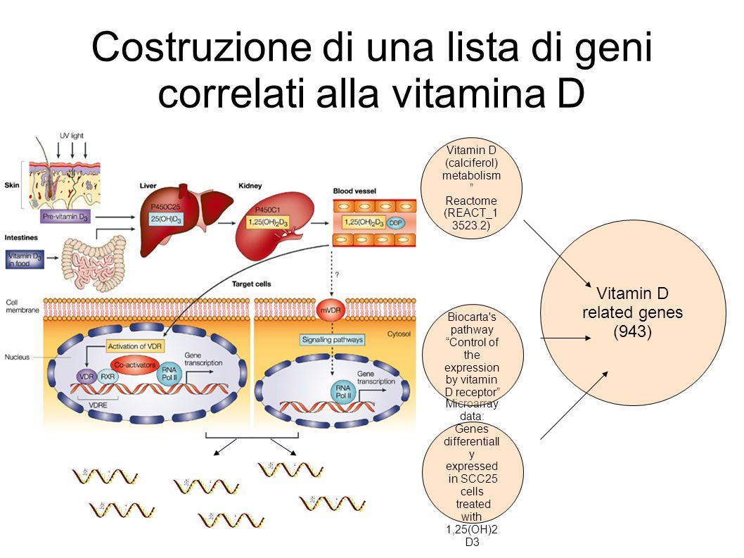 Costruzione di una lista di geni correlati alla vitamina D