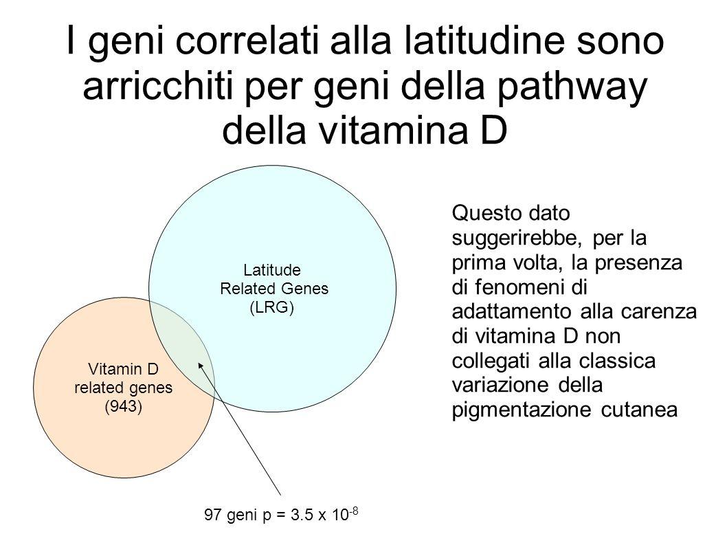 I geni correlati alla latitudine sono arricchiti per geni della pathway della vitamina D
