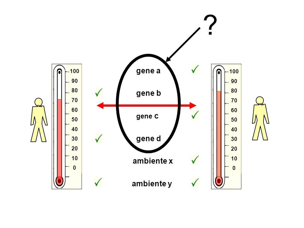 gene a gene b gene d ambiente x ambiente y gene c 100 90 80 70 60 50