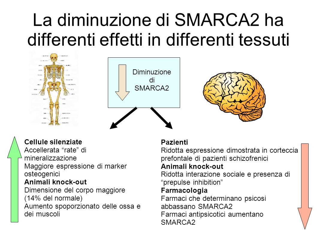 La diminuzione di SMARCA2 ha differenti effetti in differenti tessuti