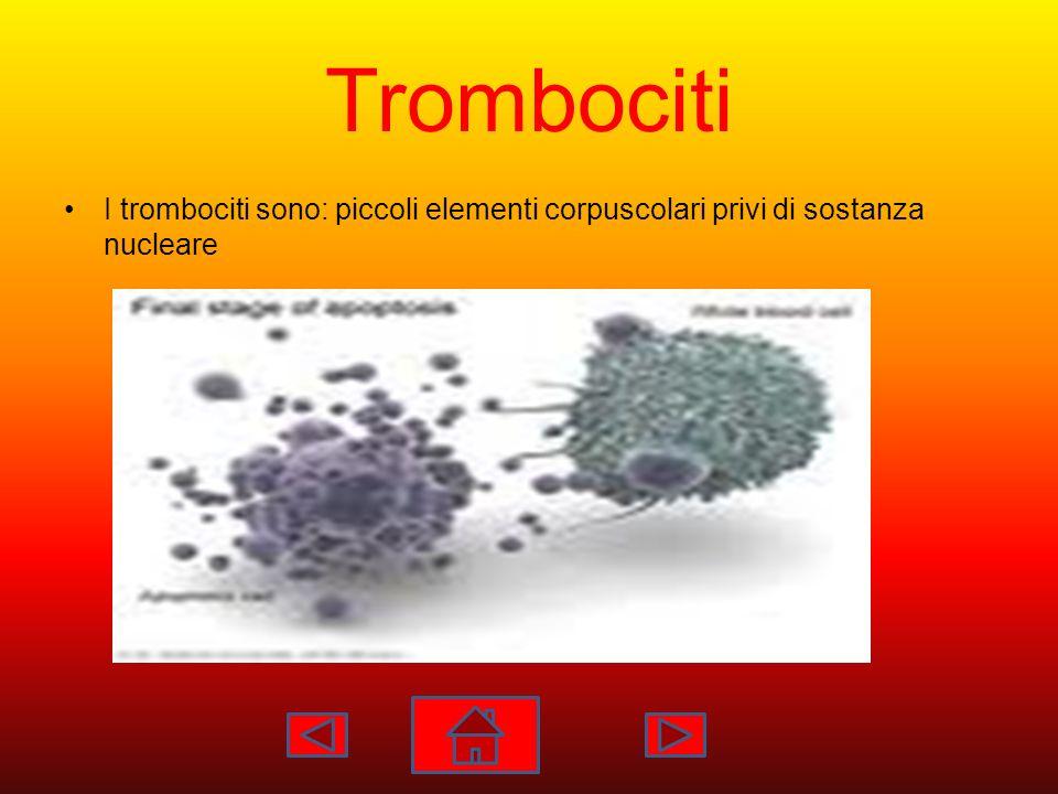 Trombociti I trombociti sono: piccoli elementi corpuscolari privi di sostanza nucleare