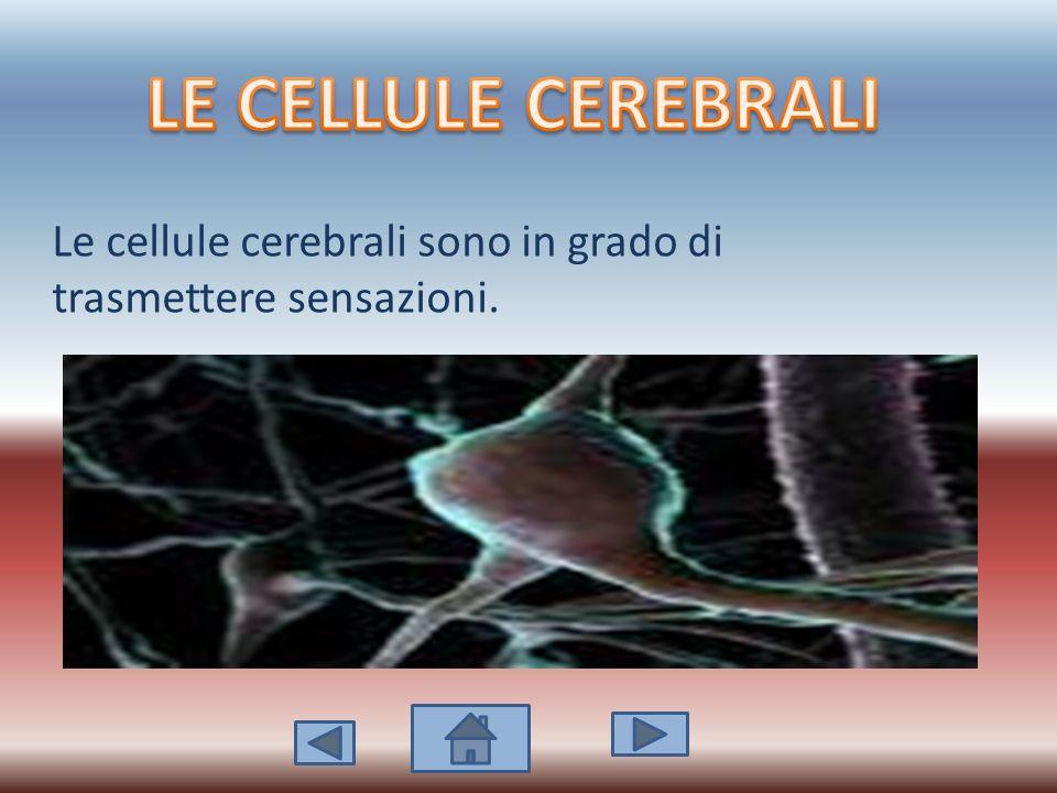LE CELLULE CEREBRALI Le cellule cerebrali sono in grado di trasmettere sensazioni.