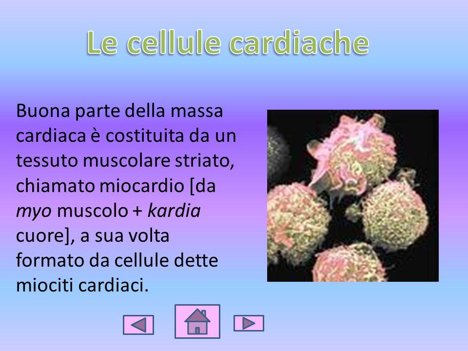 Le cellule cardiache