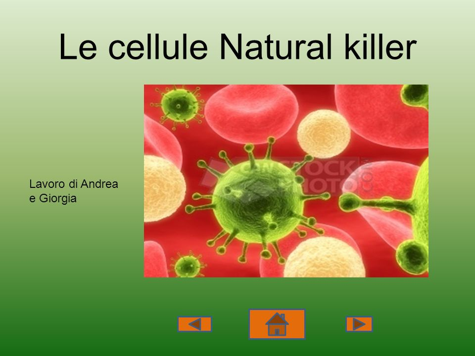 Le cellule Natural killer