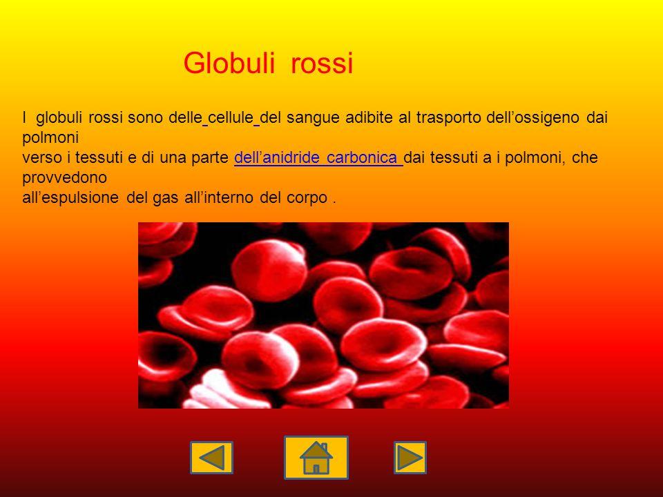 Globuli rossi I globuli rossi sono delle cellule del sangue adibite al trasporto dell'ossigeno dai polmoni.
