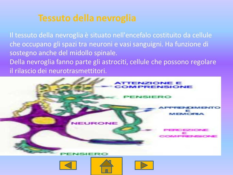 Tessuto della nevroglia