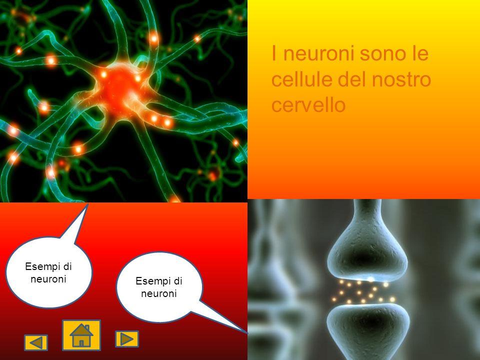 I neuroni sono le cellule del nostro cervello