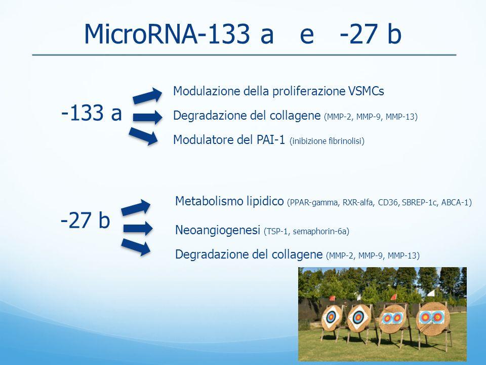 MicroRNA-133 a e -27 b Modulazione della proliferazione VSMCs. Degradazione del collagene (MMP-2, MMP-9, MMP-13)