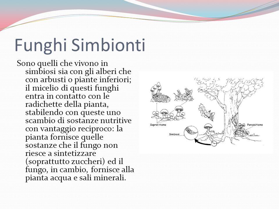 Funghi Simbionti