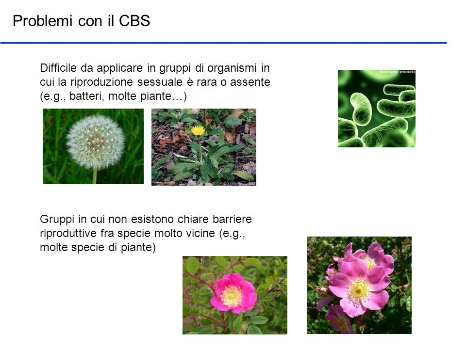 Problemi con il CBSDifficile da applicare in gruppi di organismi in cui la riproduzione sessuale è rara o assente (e.g., batteri, molte piante…)