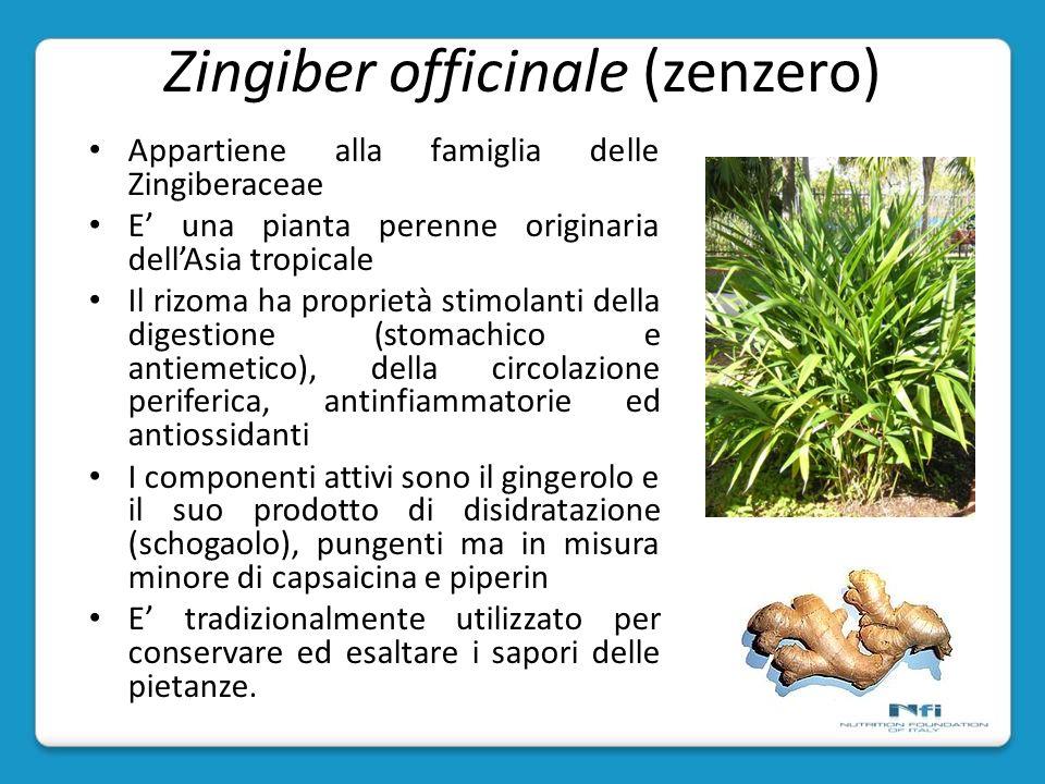 Zingiber officinale (zenzero)