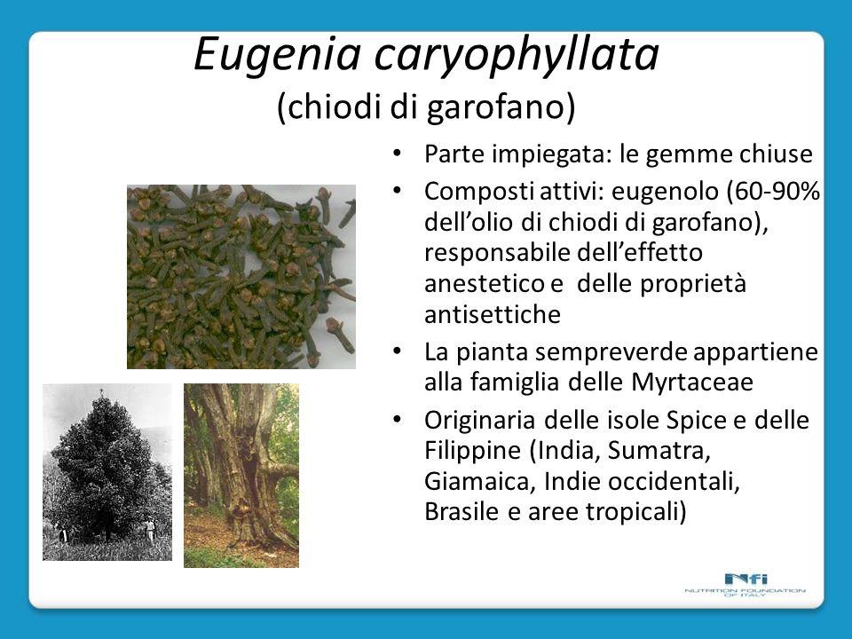 Eugenia caryophyllata (chiodi di garofano)