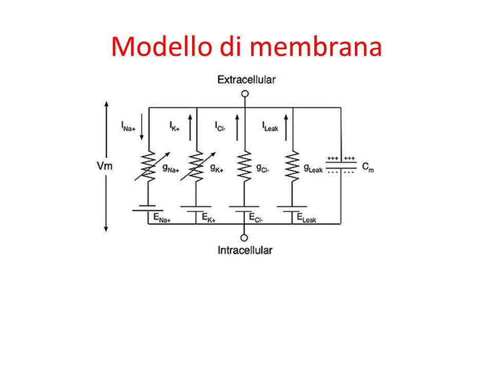 Modello di membrana