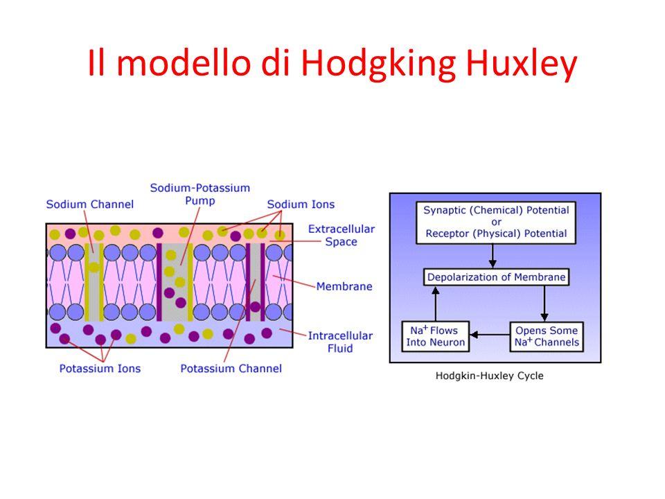 Il modello di Hodgking Huxley
