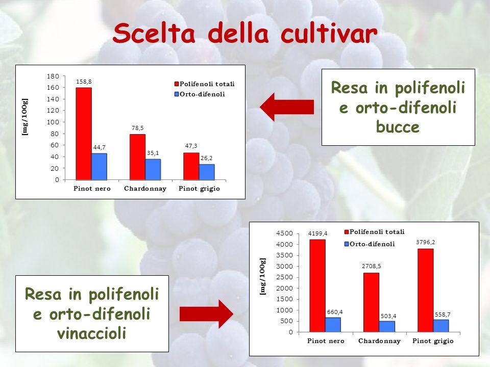 Scelta della cultivar Resa in polifenoli e orto-difenoli bucce