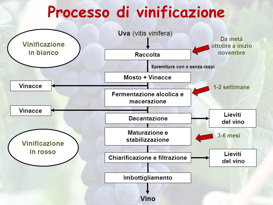 Processo di vinificazione Vinificazione in bianco