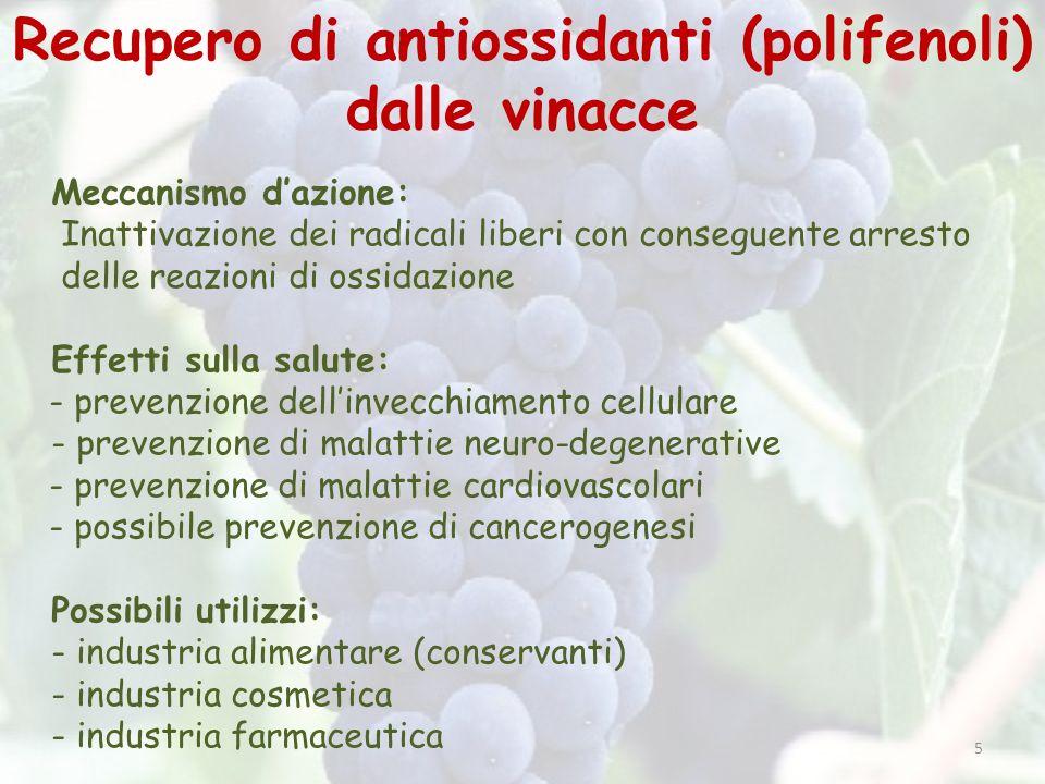 Recupero di antiossidanti (polifenoli) dalle vinacce