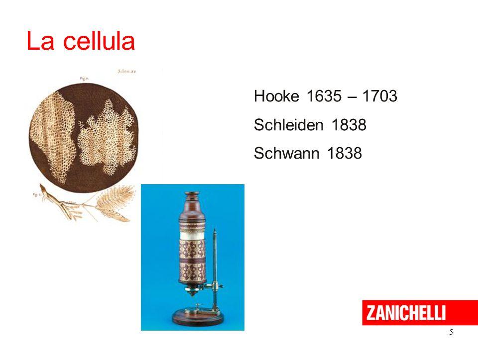 La cellula Hooke 1635 – 1703 Schleiden 1838 Schwann 1838 5 5