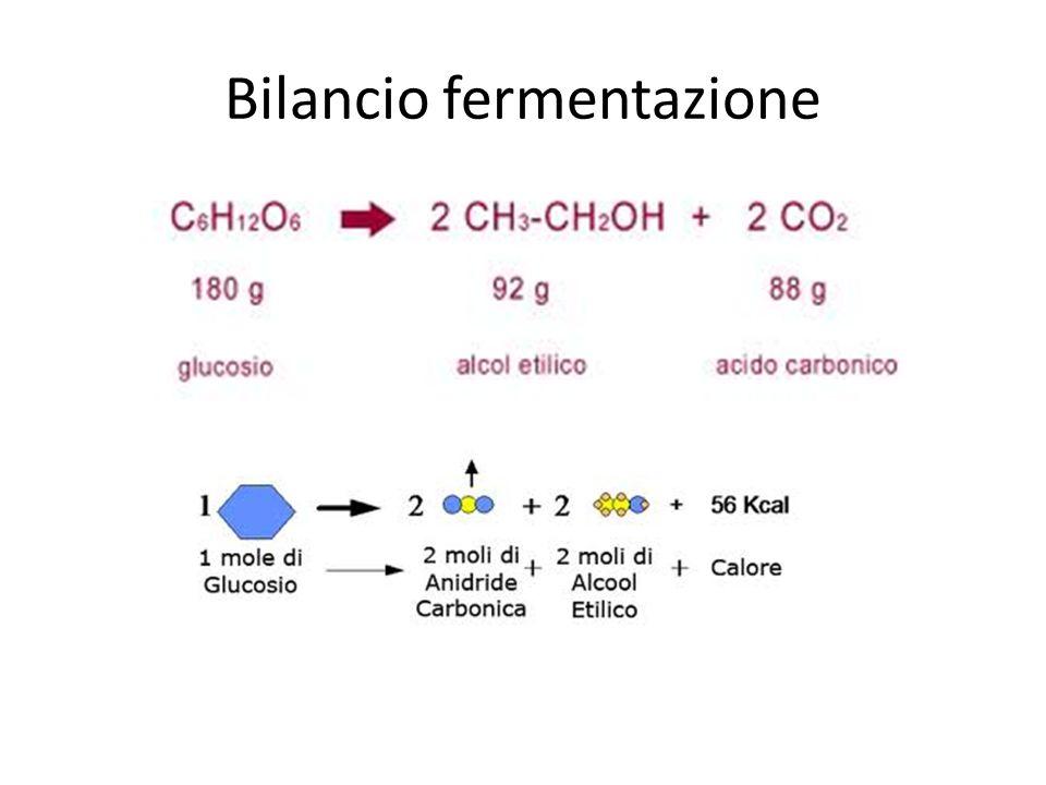 Bilancio fermentazione