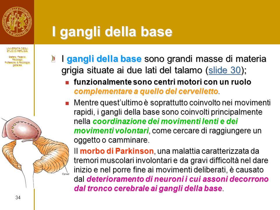 I gangli della base I gangli della base sono grandi masse di materia grigia situate ai due lati del talamo (slide 30);