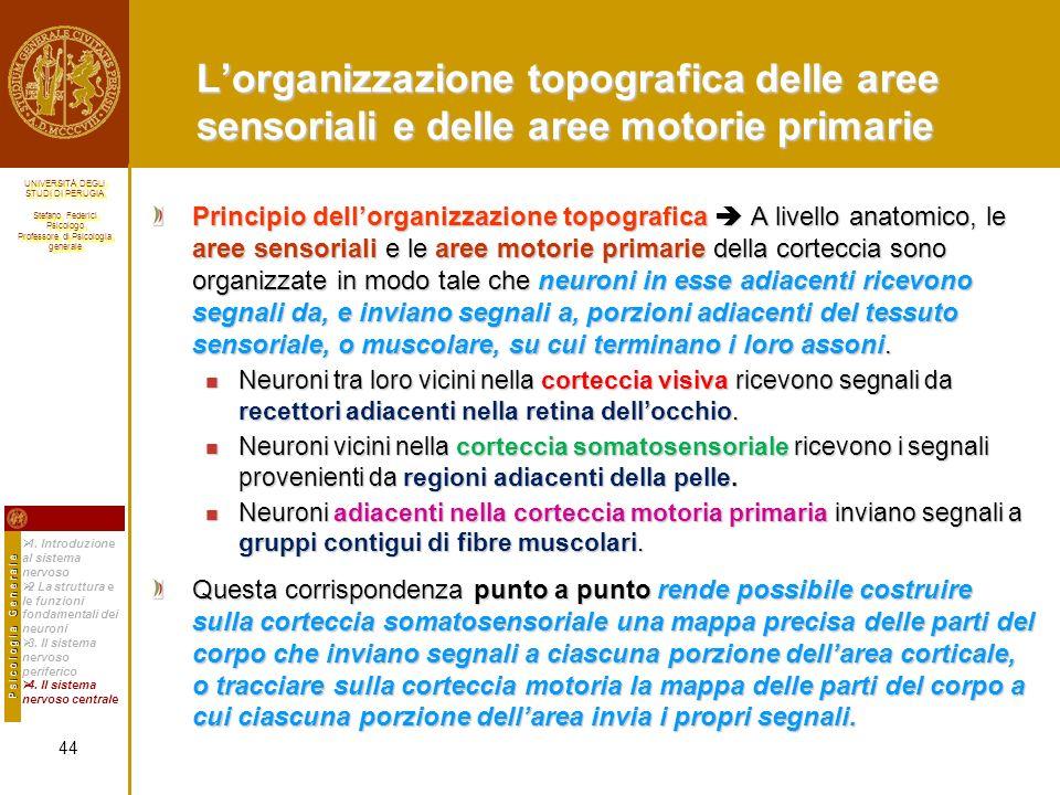 L'organizzazione topografica delle aree sensoriali e delle aree motorie primarie