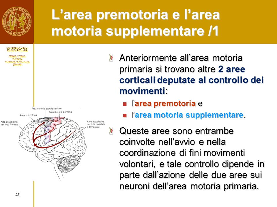 L'area premotoria e l'area motoria supplementare /1