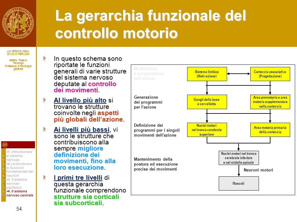 La gerarchia funzionale del controllo motorio