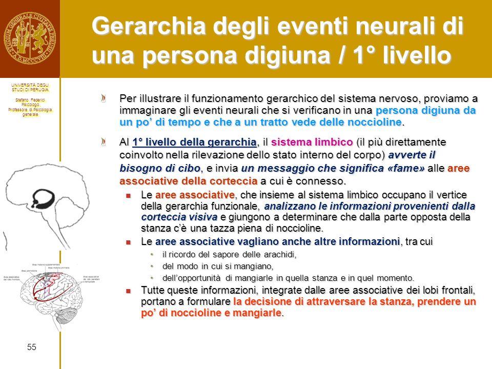 Gerarchia degli eventi neurali di una persona digiuna / 1° livello