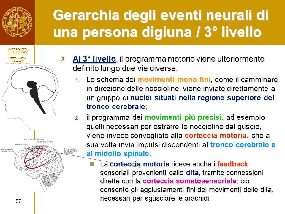 Gerarchia degli eventi neurali di una persona digiuna / 3° livello