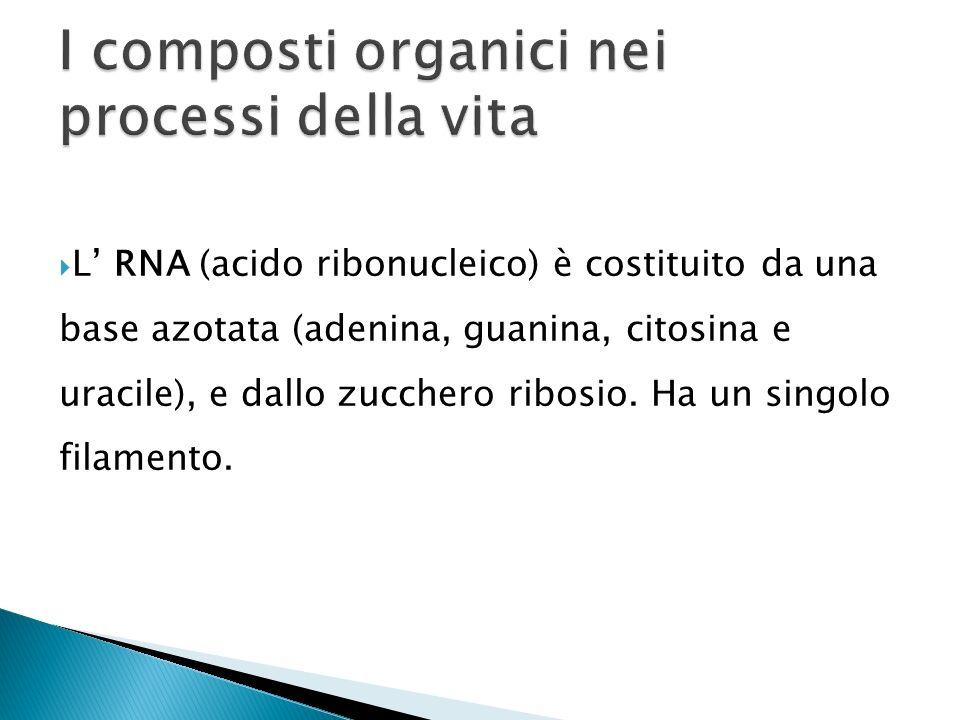 I composti organici nei processi della vita