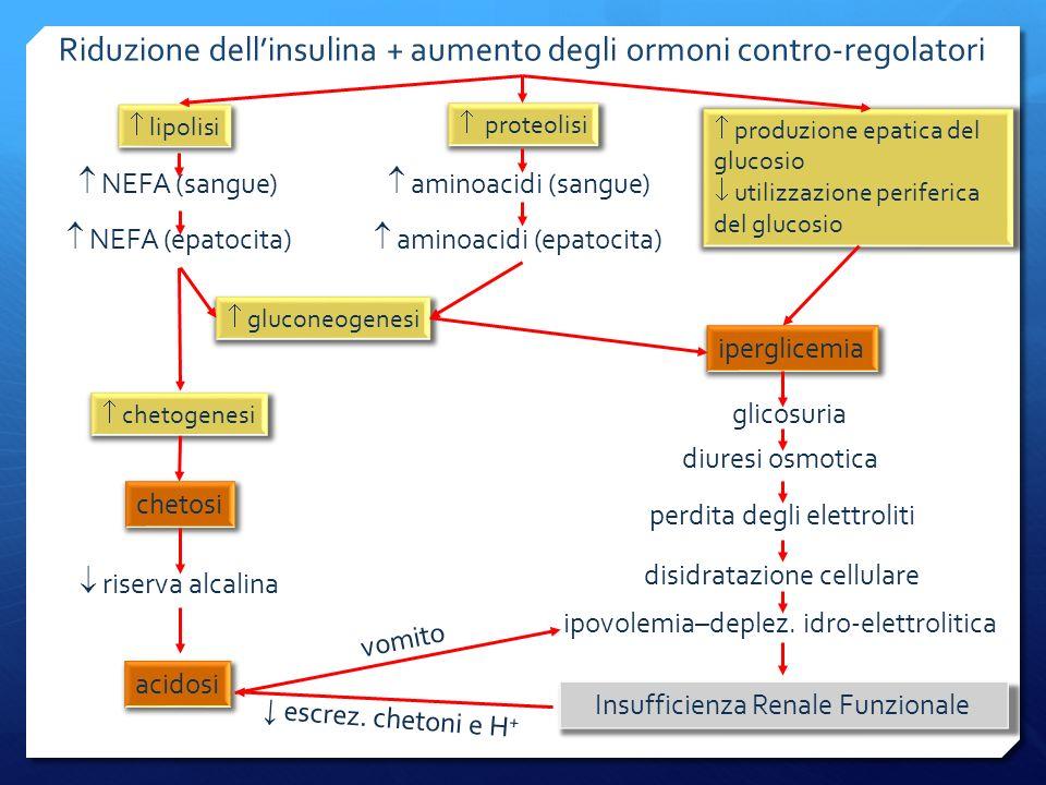 Riduzione dell'insulina + aumento degli ormoni contro-regolatori