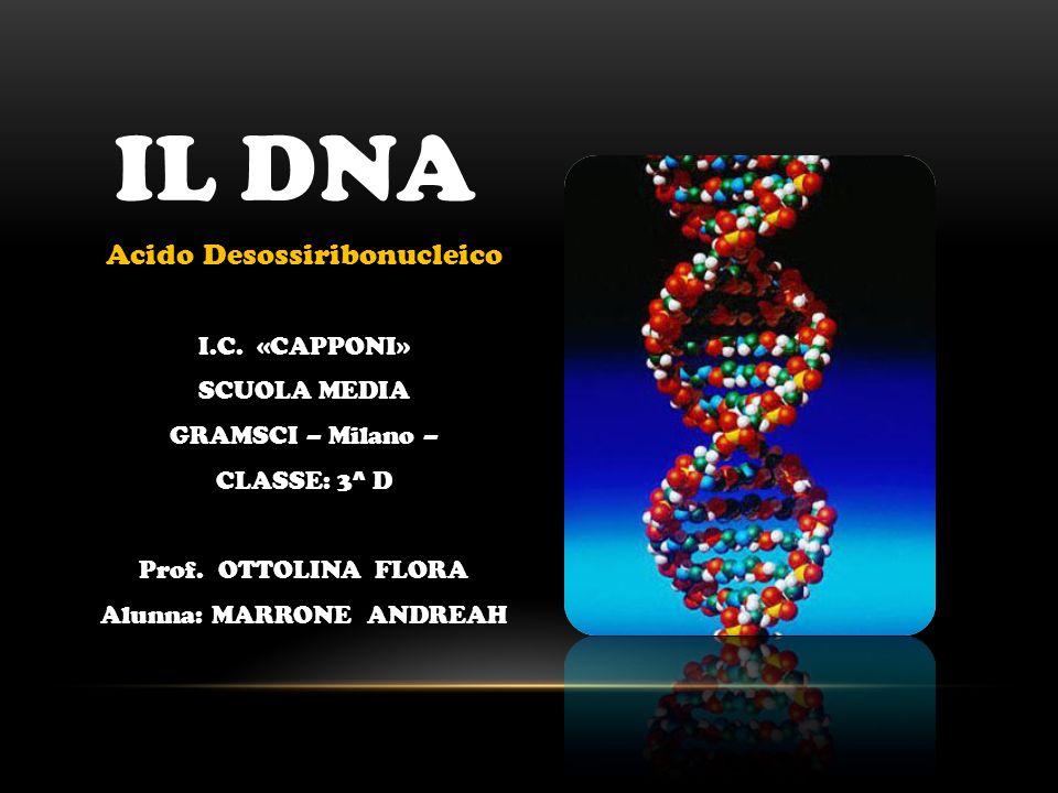 IL DNA Acido Desossiribonucleico I.C. «CAPPONI» SCUOLA MEDIA
