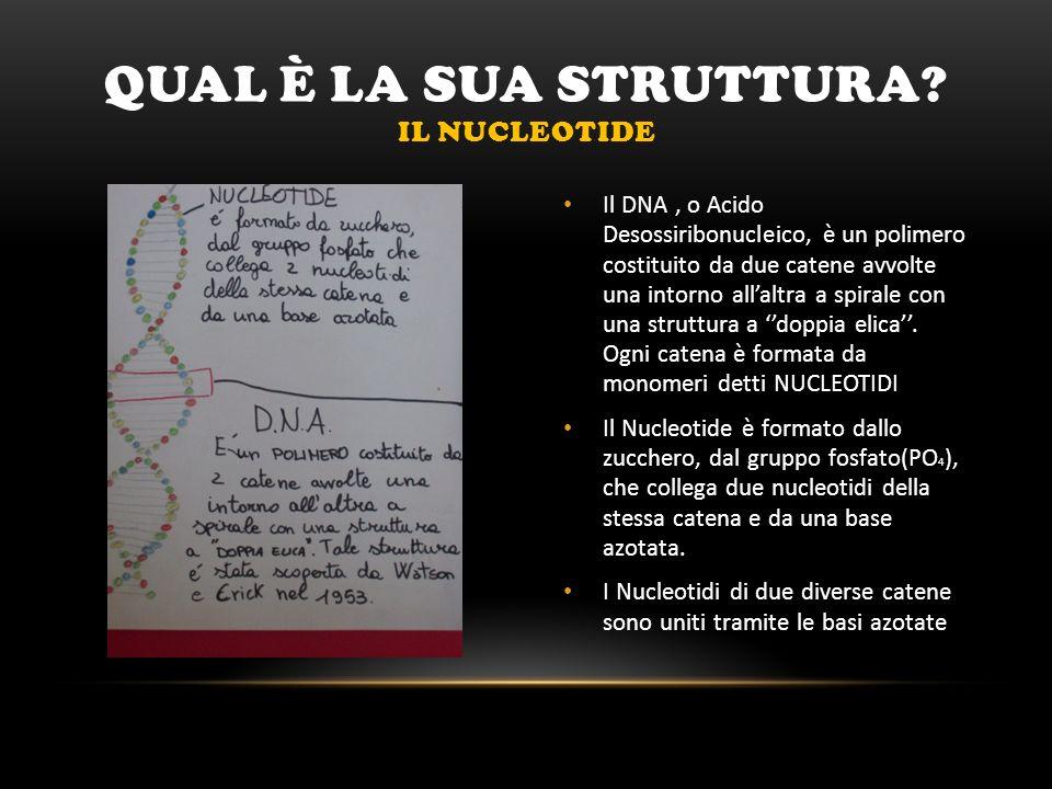 Qual è LA SUA STRUTTURA Il nucleotide