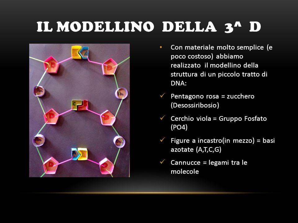 Il modellino DELLA 3^ D